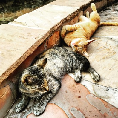 Here are some lazy-ass stray cats. They were all over the hotel, just basking in the glory of paradise all day long; lickin' asses and chasin' tails -- what a life.