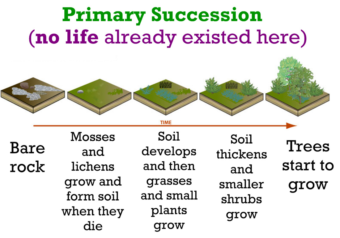 Life Sciences Ecological Succession