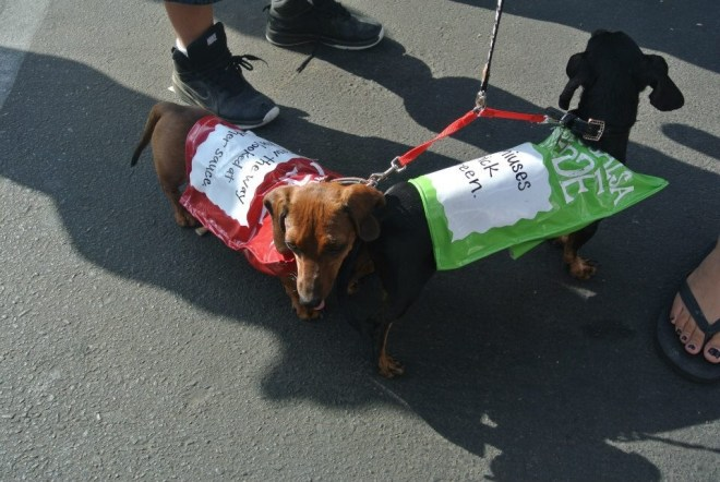 Halloween costume ideas - plus sizze costume - Dog costume ideas - Miss Piggy - Egyptian - King Tut