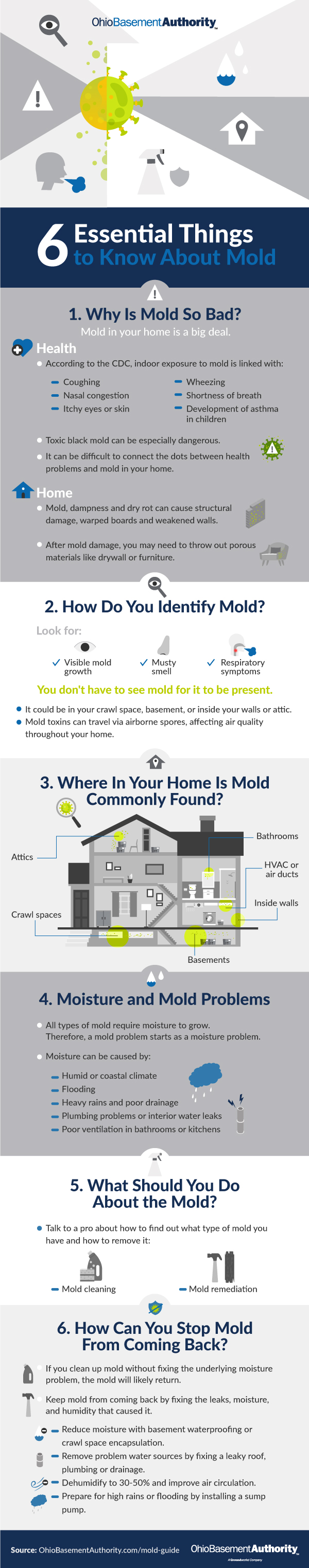 6 Essential Things to Know About Mold