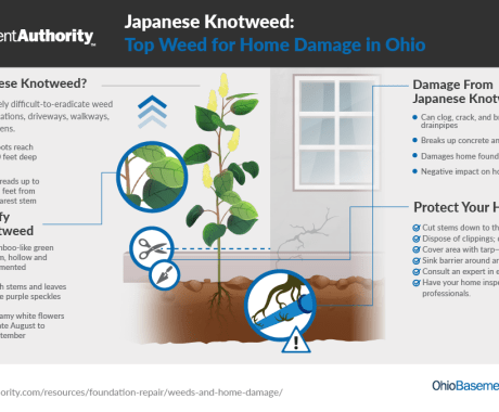 Japanese Knotweed: Top Weed for Home Damage in Ohio