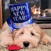 new year pup
