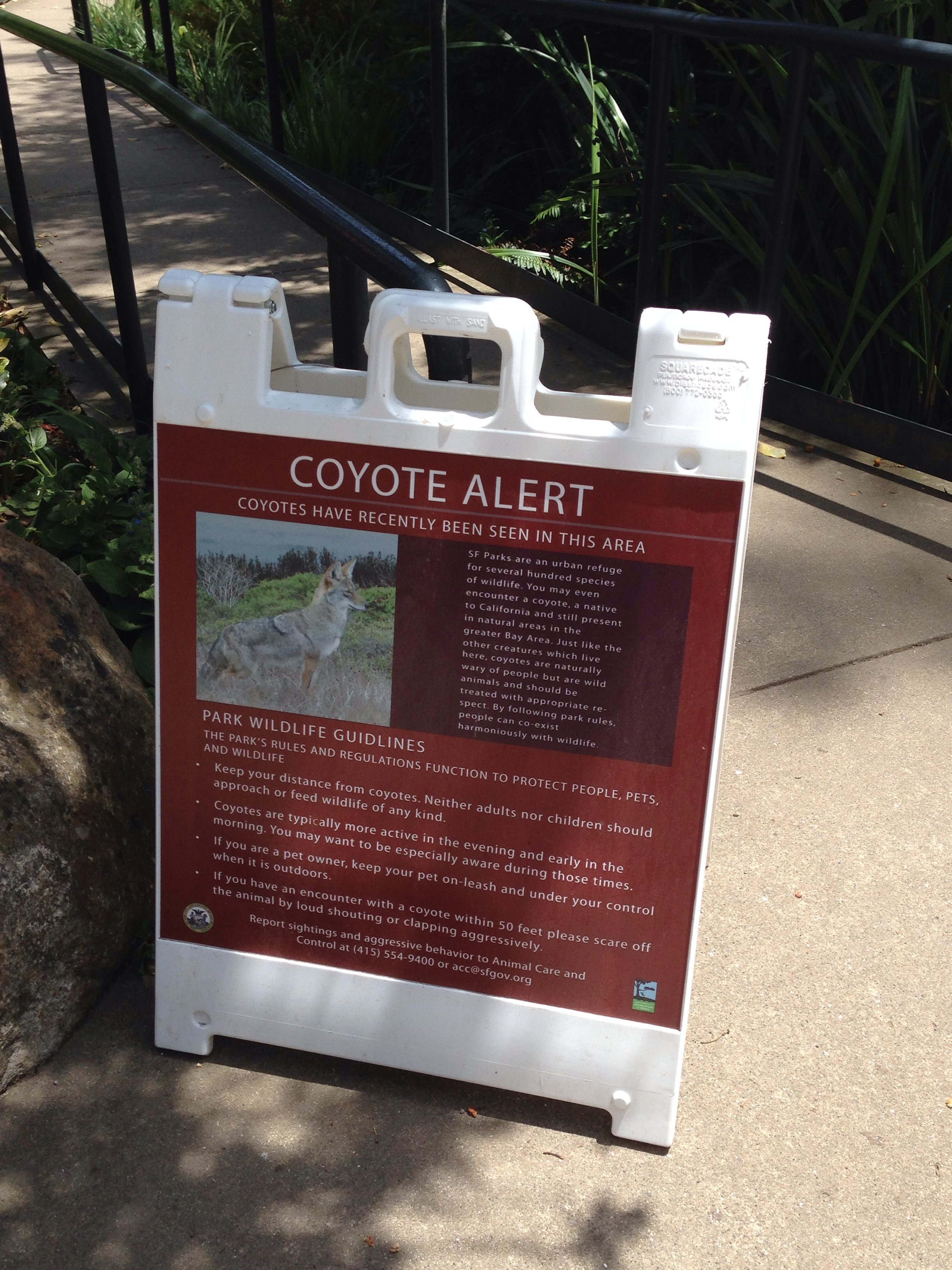 2 4 Human Coyote Canis Latrans Interaction And Conflict