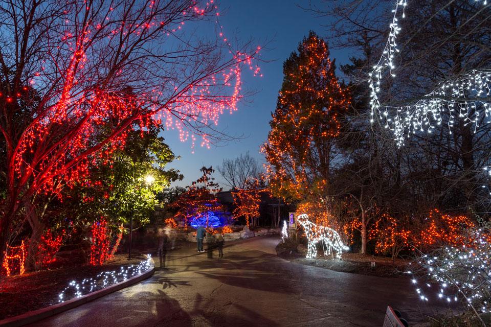 Zoo Lights Cleveland