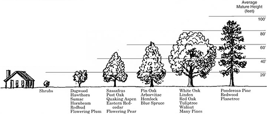 Tree Height Estimation
