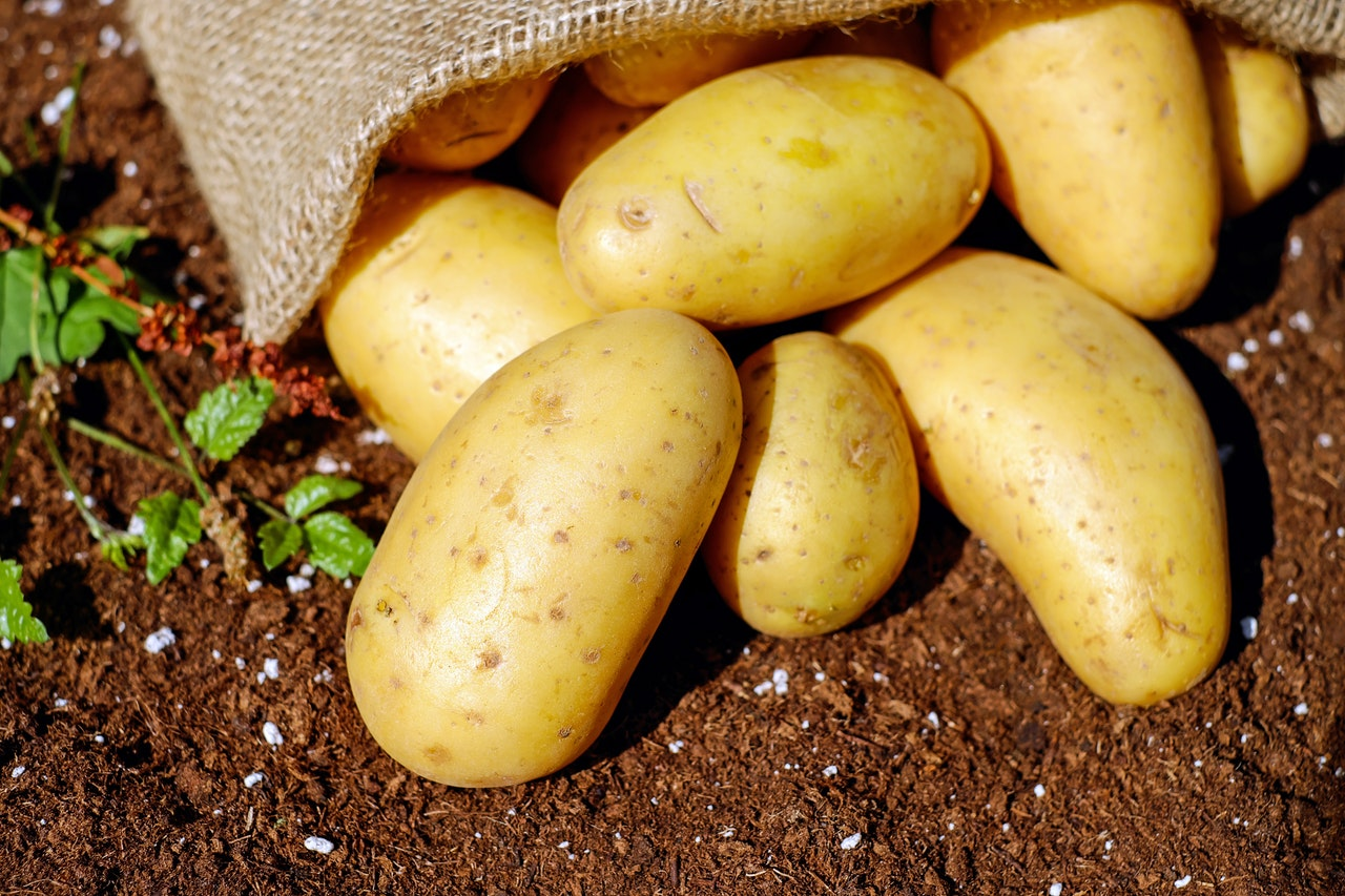 regrow potatoes