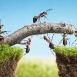 French expression: Avancer à pas de fourmis