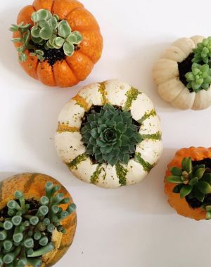 DIY Succulent Pumpkins | Oh Lovely Day