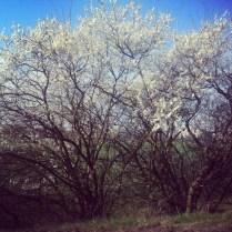 Po propršené neděli zase jaro se sluníčkem!