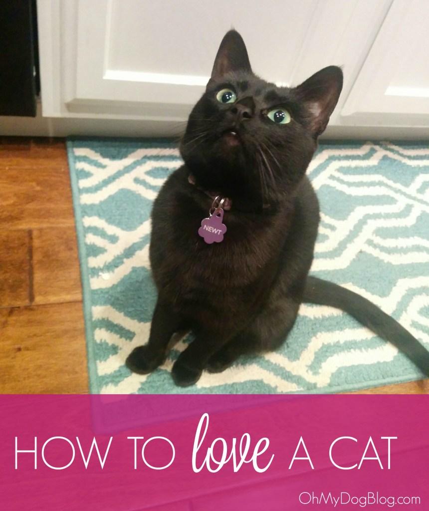 How to love a cat   OhMyDogBlog.com