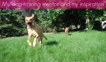 My dog training mentor | OhMyDogBlog.com