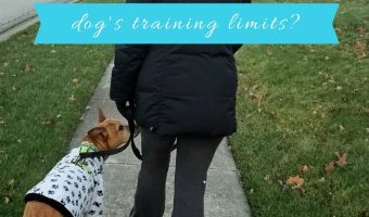 Do you know your dog's training limits_