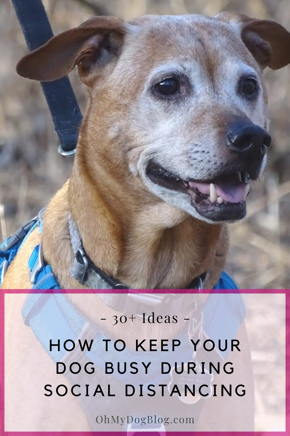 Practicing recall with Cooper is one of 30+ ways to keep busy during social isolation