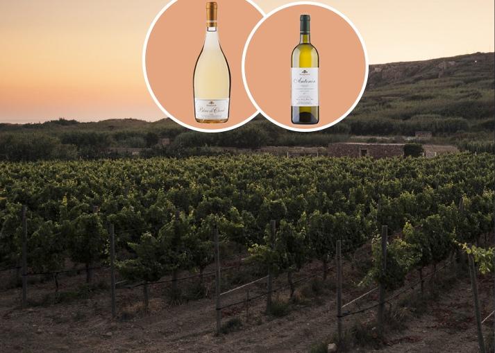 A unique wine event at the picturesque estate- Ramla Valley Estate in Gozo