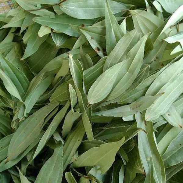 A pile of dried Indian Bay Leaves, Tej Patta