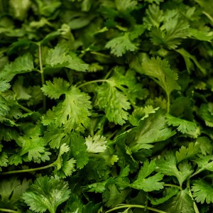 Close up photo of fresh coriander cilantro