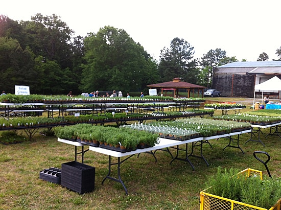 Wake Forest HerbFest