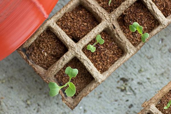 Te You Seedlings