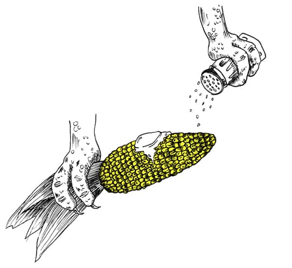 eating_corn
