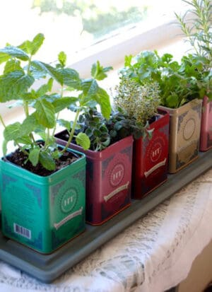 recycled tea boxes into planters