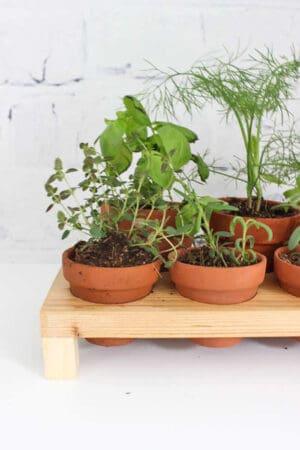 diy indoor herbs garden stand
