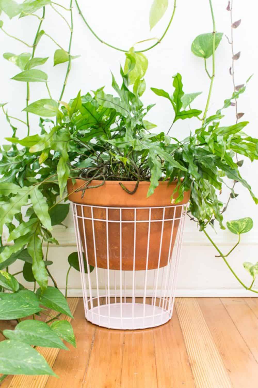 diy cage plant holder