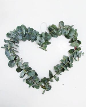 eucaliptus heart