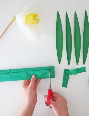 stem with grenn paper
