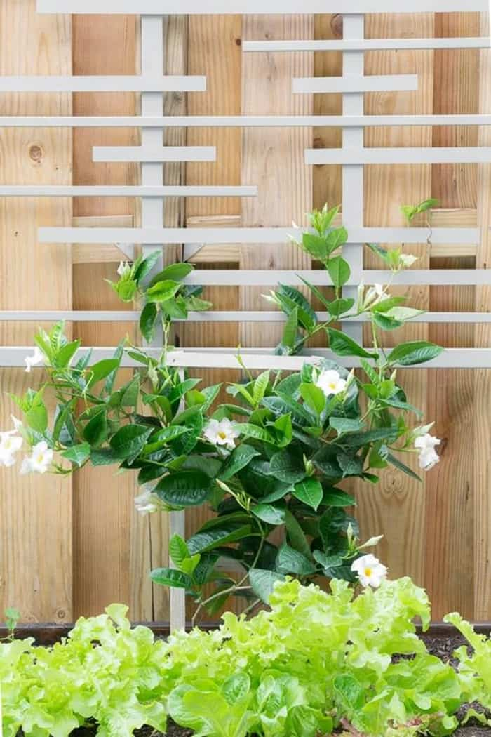 diy plant trellis