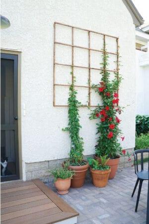 diy easy plant trellis