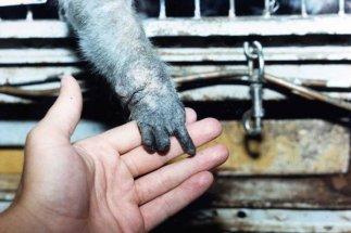 A mão de Billy - mutilada pelas operações realizadas.
