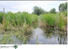 Photo source: Study about the condition of the remaining Studenchishte Marsh