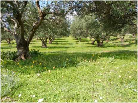 This is the closest olive tree orchard near our house. It's a great place to go and relax.