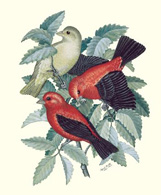 Scarlet Tanagers on one of the note cards for sale at Ijams Nature Center