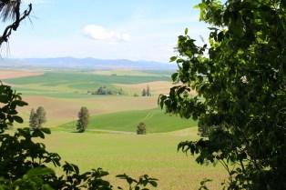 View from picnic area -- Kamiak Butte