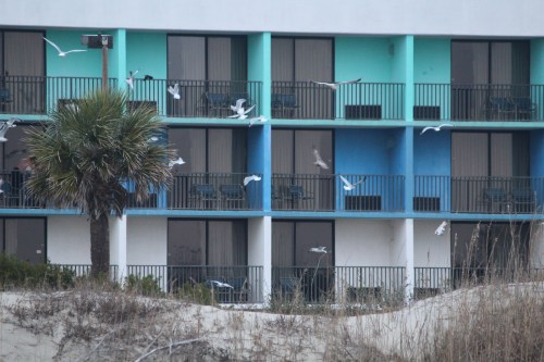 Feeding the seagulls -- motel at Tybee Island