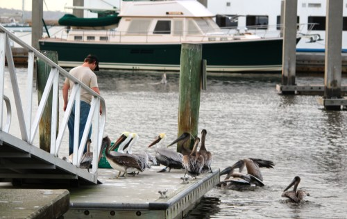 Feeding the fish at 5:30, Amelia Island, waterfront