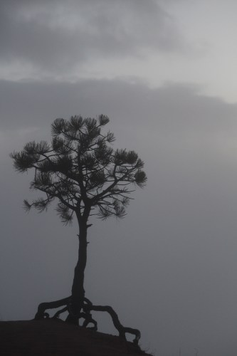 A lone tree at the rim -- Bryce Canyon National Park.