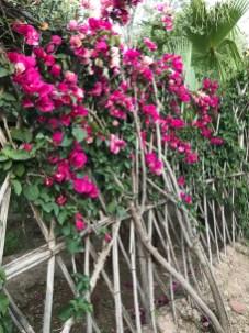 Twig trellises at Jnane Tamsna