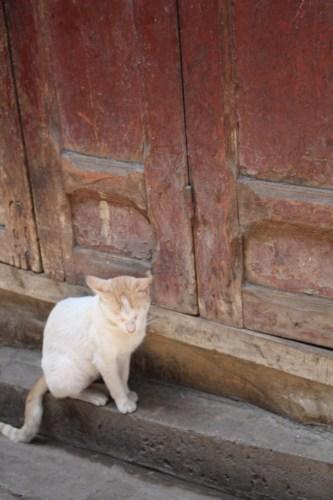 Asleep at the door: Marrakech
