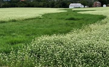 Field at Gettysburg