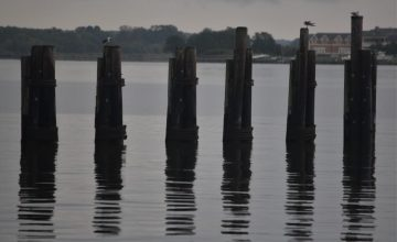 Posts at Bellevue Landing, Royal Oak, MD