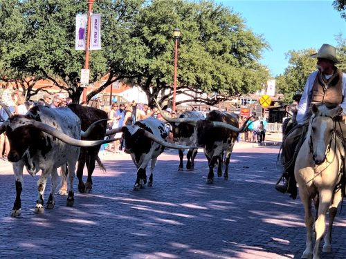 Ft. Worth Herd Cattle Drive, Ft. Worth Stockyards