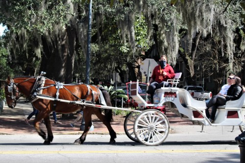 Carriage ride, Savannah GA