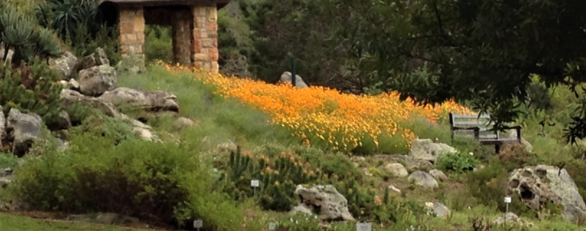 Kirstenbosch Botanical Gardens, Cape Town, S. Africa