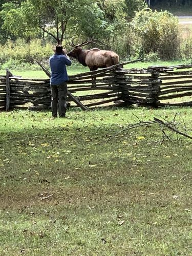Photographing elk in Great Smoky Mountains
