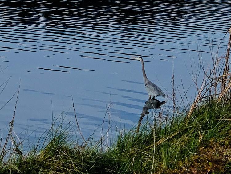 Huntington Beach State Park, S. Carolina