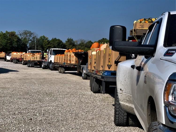 Trucks loaded with pumpkins await bidding, Crab Orchard, Kentucky