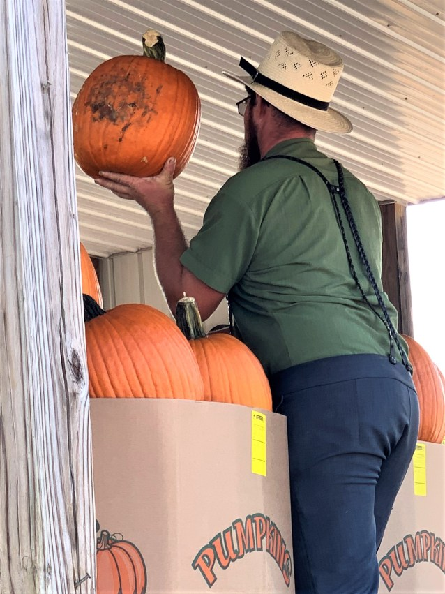 Bidding on pumpkins by size, Lincoln Count, Kentucky