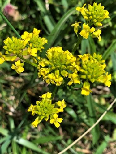 Mountain flowers, Blue Ridge Parkway, NC